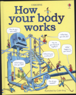 HOW YOUR BODY WORK
