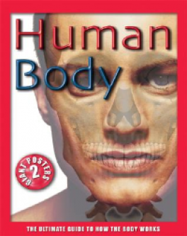 HUMAN BODY: THE ULTIMATE GUIDE TO HOW THE BODY WORKS
