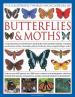 ILLUSTRATED WORLD ENCYCLOPEDIA OF BUTTERFLIES & MOTHS,