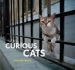 CURIOUS CATS