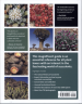 TIMEBER PRESS GUIDE TO SUCCULENT PLANTS OF THE WORLD, THE